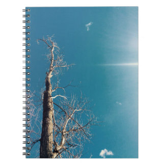 Bare Tree Notebook