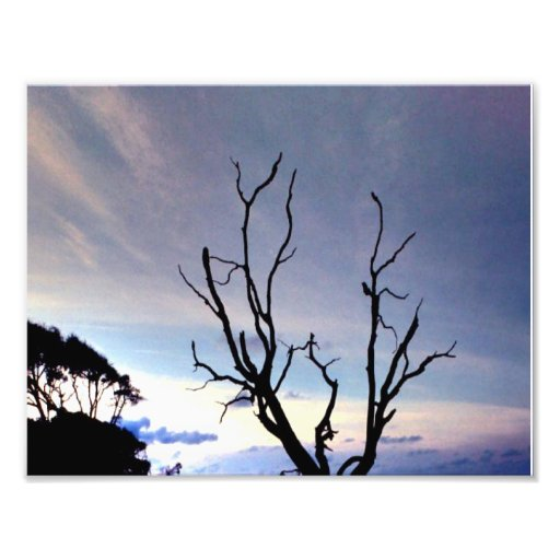Bare Tree On Shore At Sunset Photo