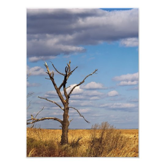 Bare Tree Print
