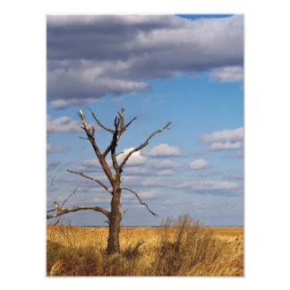 Bare Tree Print Photograph