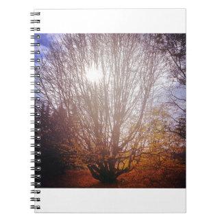 Bare Tree Spiral Notebook