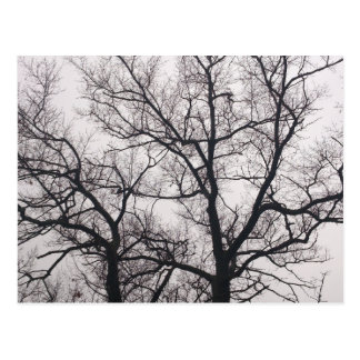 Bare Trees in High Park Post Card