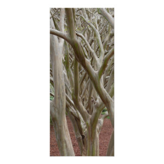 Bare Trees Posters