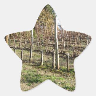 Bare vineyard field in winter . Tuscany, Italy Star Sticker