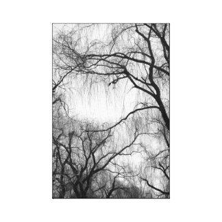 Bare Weeping Willows Moody Black and White Canvas Print