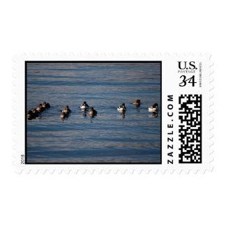 BARGOL Barrows Goldeneyes Postage Stamp