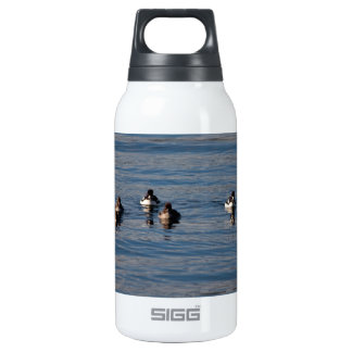BARGOL Barrows Goldeneyes SIGG Thermo 0.3L Insulated Bottle