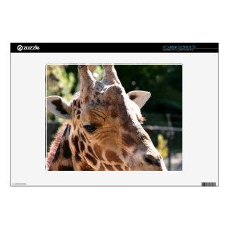 Baringo Giraffe Decals For Laptops
