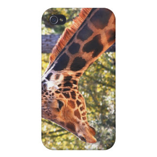 Baringo Giraffe iPhone 4/4S Case