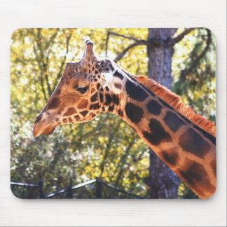 Baringo Giraffe Mouse Pad