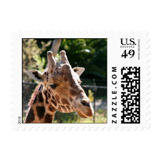 Baringo Giraffe Postage