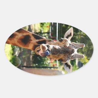 Baringo Giraffe Oval Sticker