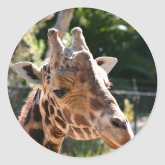 Baringo Giraffe Classic Round Sticker