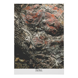 Bark Face, Genoa, Nevada Poster
