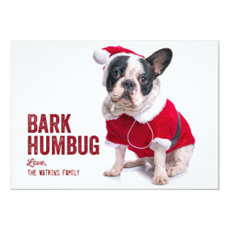 Bark Humbug Dog Lover Holiday Card
