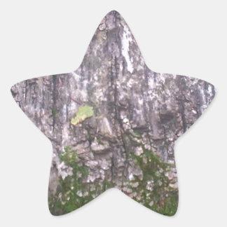 Bark Moss Star Sticker