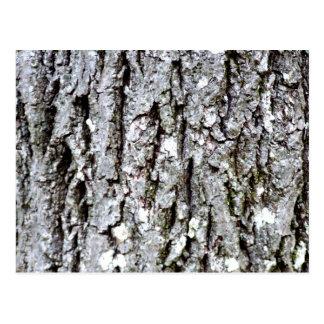 Bark Of A Hickory Tree Postcard