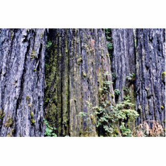 Bark Of Ancient Redwood Trees Photo Cutouts