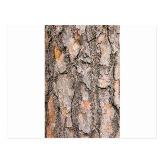 Bark of Scotch pine tree as background Postcard