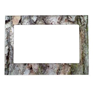 bark of Scots pine Frame Magnets