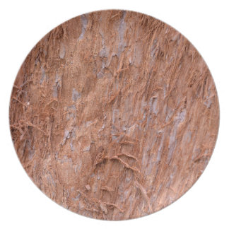 bark of tree in a forest dinner plate