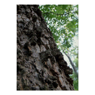 Bark on a Tree Poster