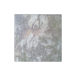 Bark on a tree stone magnet