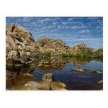 Barker Dam Reflection at Joshua Tree National Park Postcard