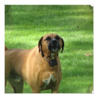 Barking Boxer Dog Invitations