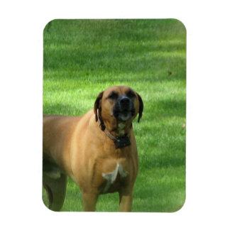 Barking Boxer Dog Premium Magnet Rectangle Magnets