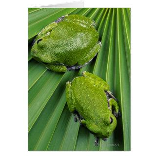 Barking Tree Frog (hyla gratiosa) Card