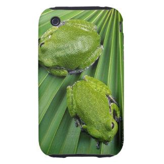Barking Tree Frog (hyla gratiosa) iPhone 3 Tough Case