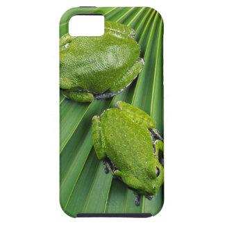 Barking Tree Frog (hyla gratiosa) iPhone 5 Covers