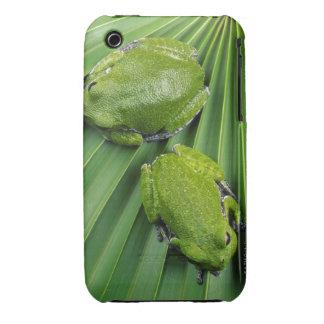 Barking Tree Frog (hyla gratiosa) Case-Mate iPhone 3 Case