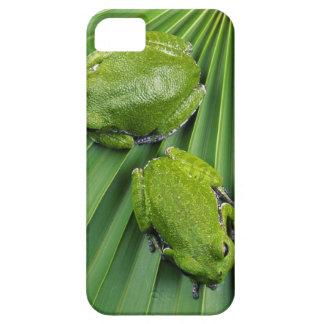 Barking Tree Frog (hyla gratiosa) iPhone 5 Cases