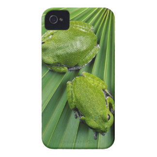 Barking Tree Frog (hyla gratiosa) iPhone 4 Case-Mate Cases