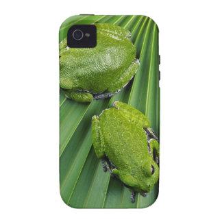 Barking Tree Frog (hyla gratiosa) iPhone 4 Cover