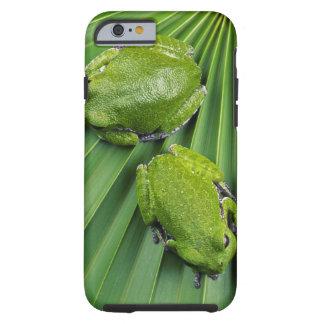 Barking Tree Frog (hyla gratiosa) Tough iPhone 6 Case