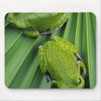 Barking Tree Frog (hyla gratiosa) Mouse Pad