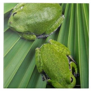Barking Tree Frog (hyla gratiosa) Tile