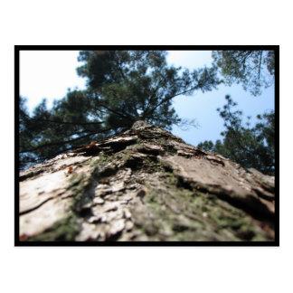 Barking up the wrong tree postcard