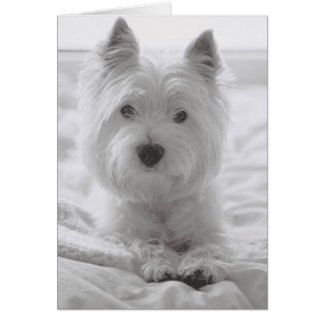 Barko in Bed Greeting Card