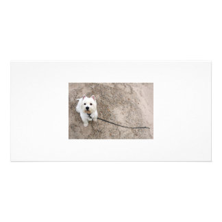barko on sandy beach with leash picture card