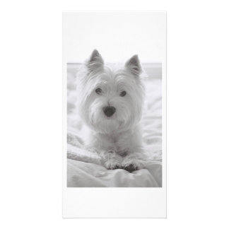 Barko on the bed photo cards