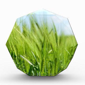 barley-897