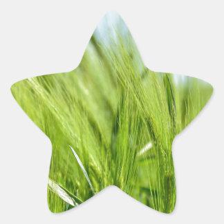 barley-897 pegatina en forma de estrella