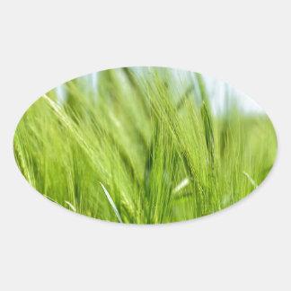 barley-897 pegatina ovalada