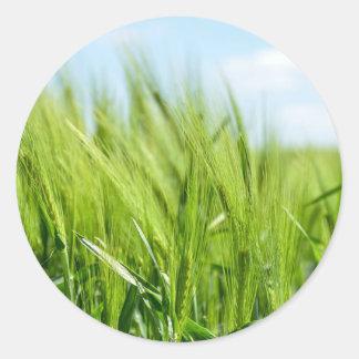barley-897 pegatina redonda