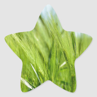 barley-897 star sticker