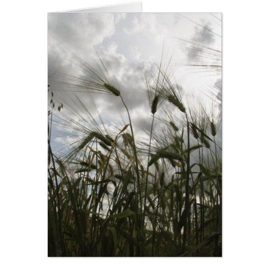Barley Card